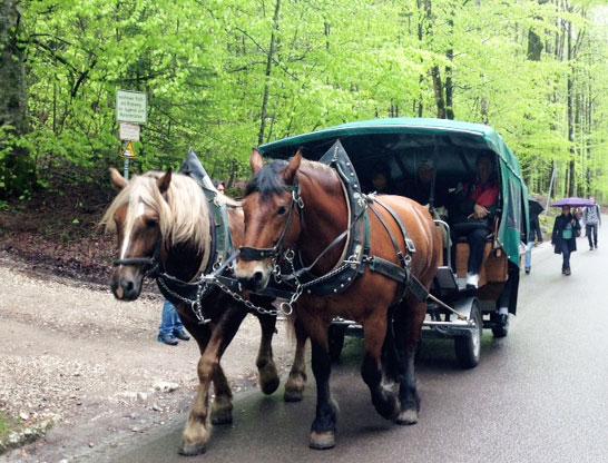 Come arrivare al castello di Neuschwanstein