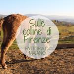 Sulle colline di Firenze: la Fattoria di Maiano