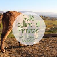 colline di Firenze
