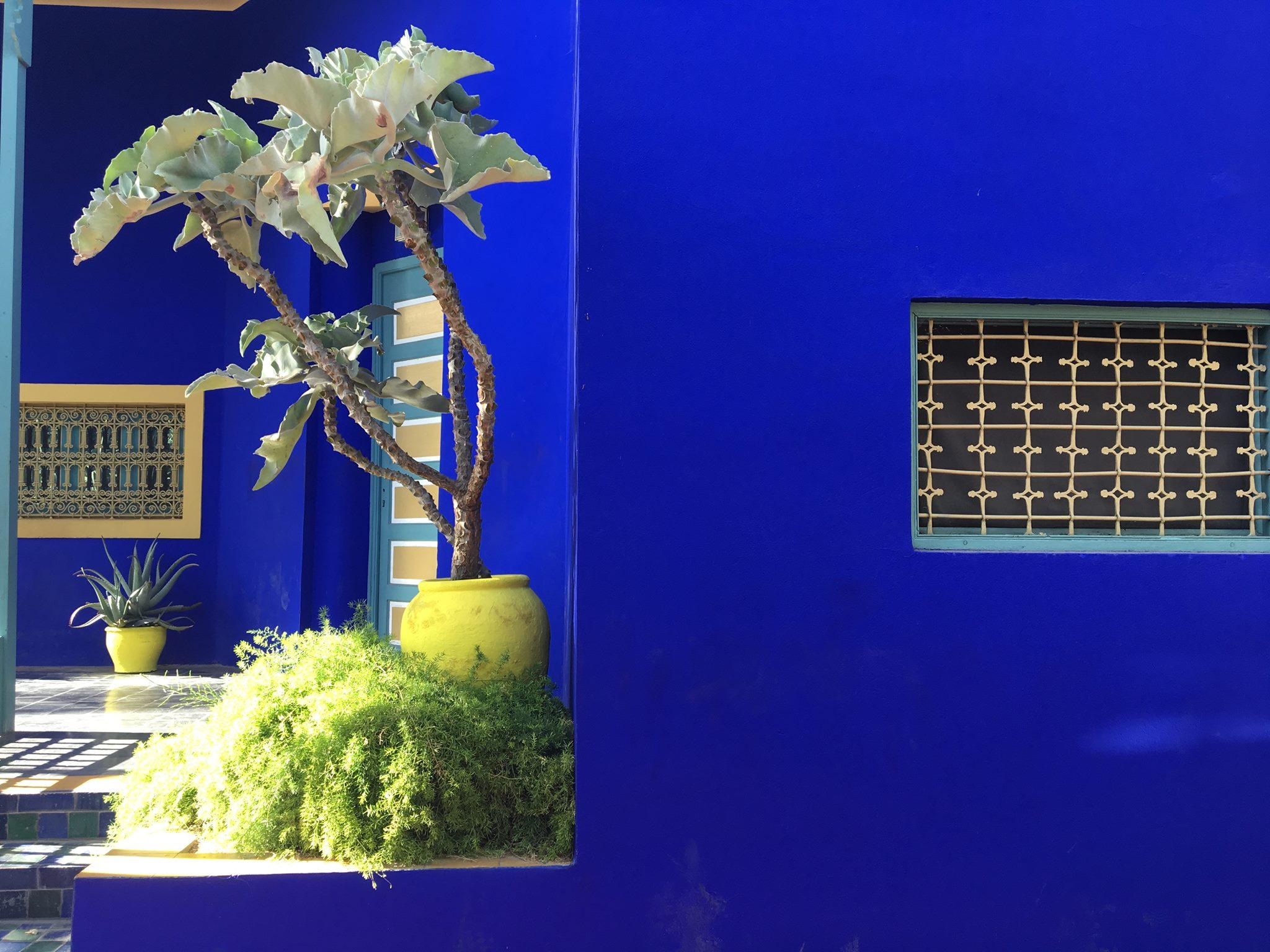 cosa vedere a Marrakech - giardini Majorelle