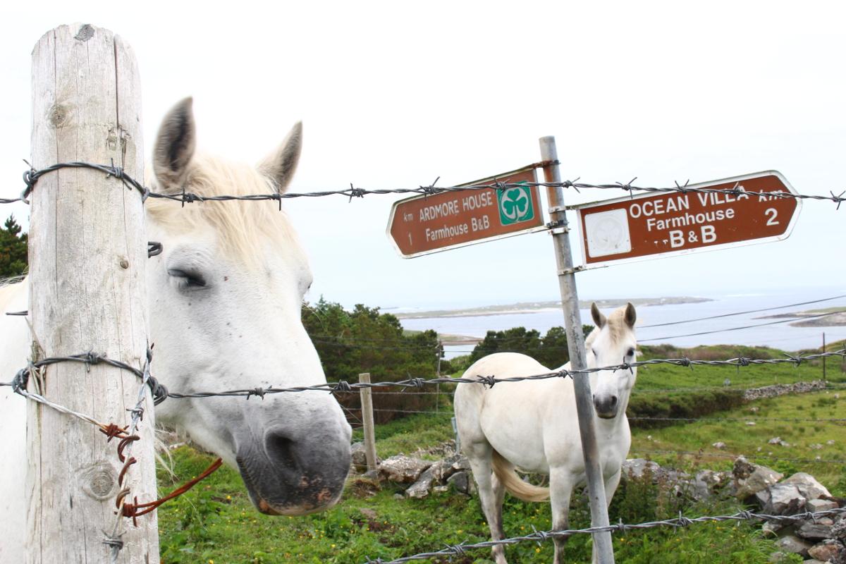 cavalli Sky Road Clifden
