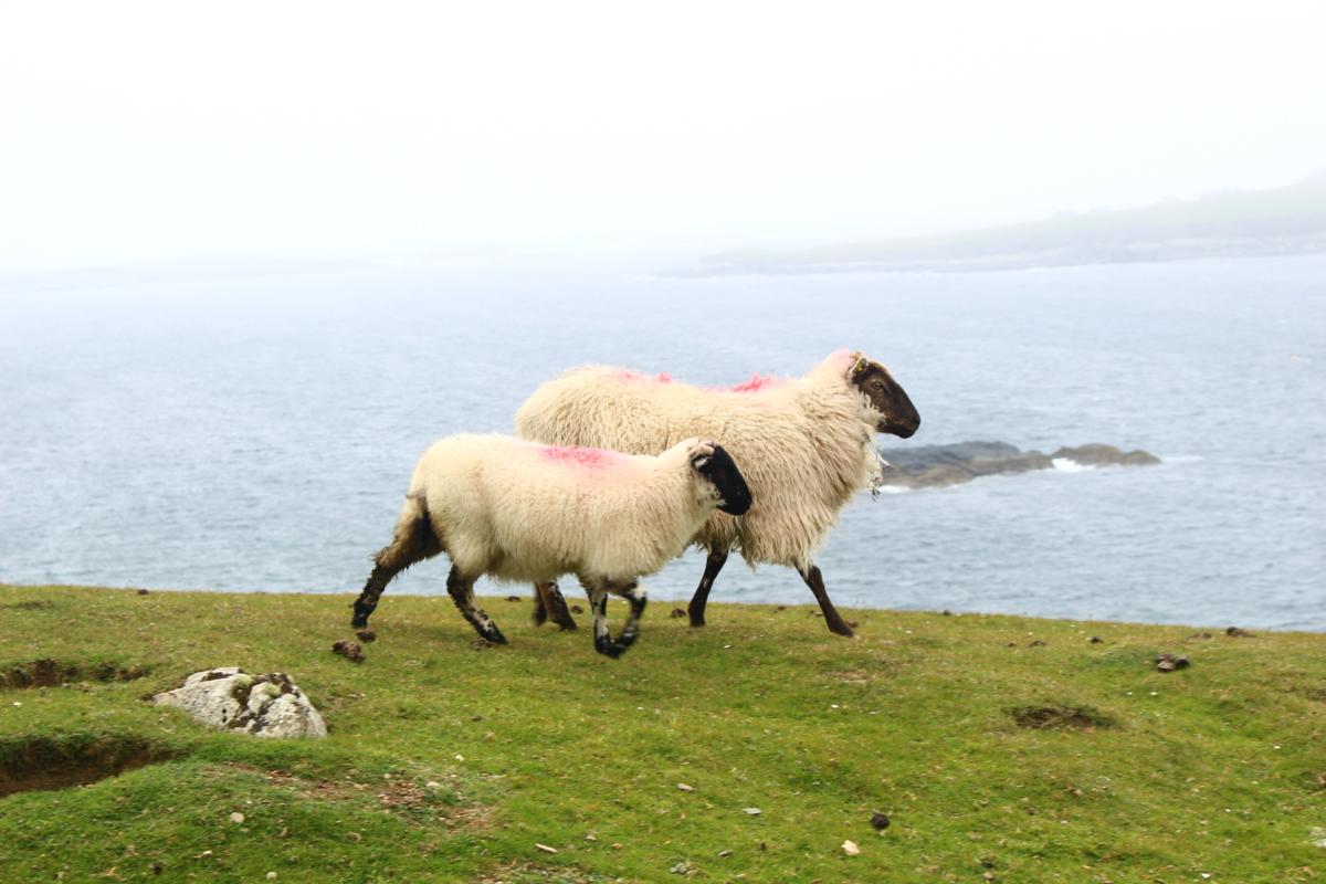 visitare Inishbofin Island - Connemara