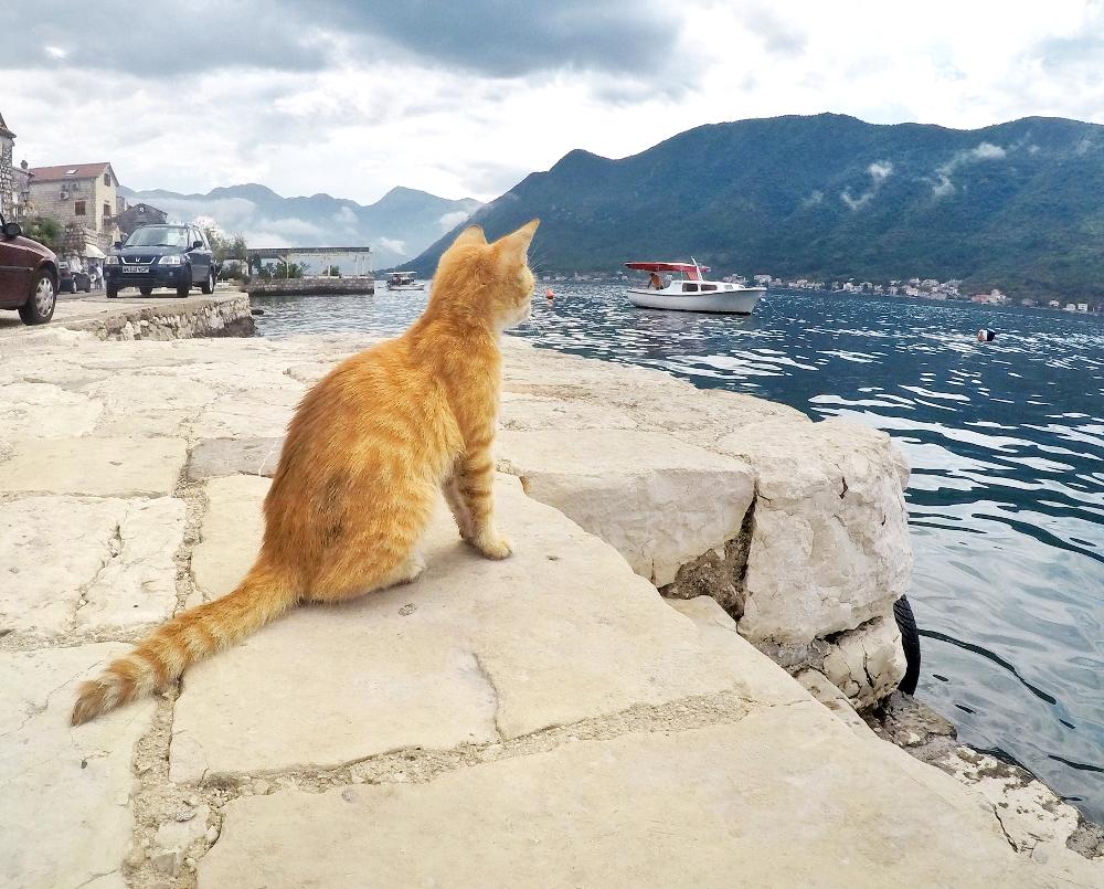 bocche di cattaro: gatto