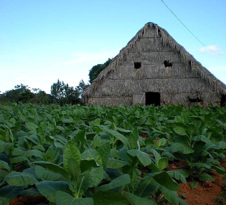 visitare piantagione tabacco cuba