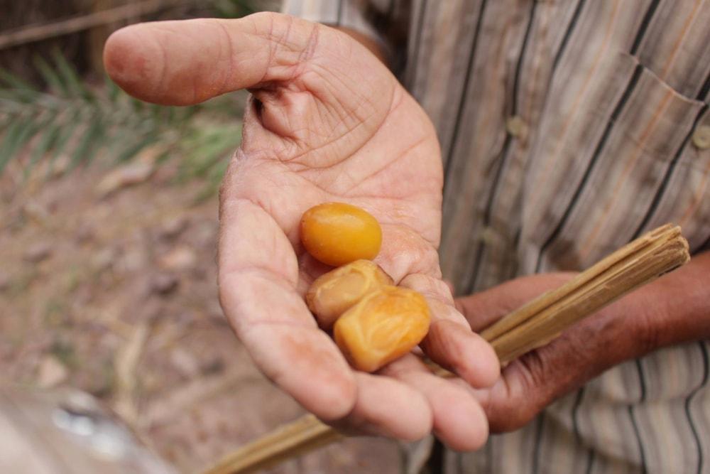 cucina marocchina: dolci datteri