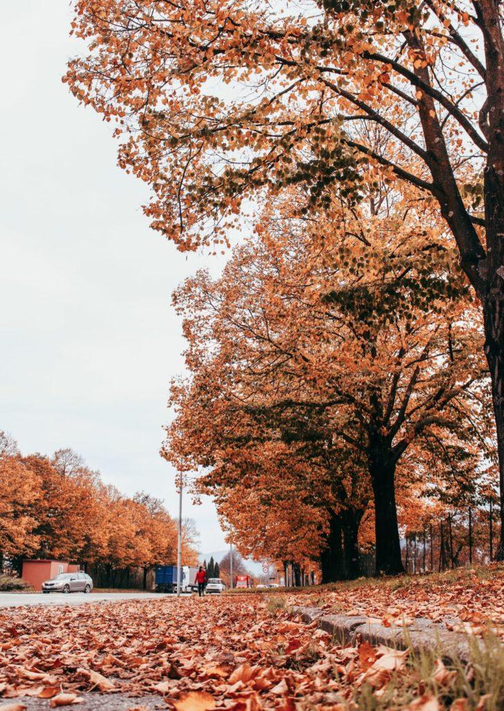 pistoia autunno